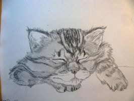 sleep oh to be a cat by chrisravensar