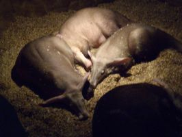Colchester Zoo photos 10 by pan77155