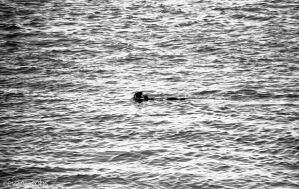 Nessie by evanjacobs