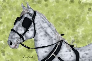 Kladruber mare by overshined