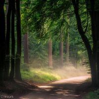 Dusty Road by tvurk