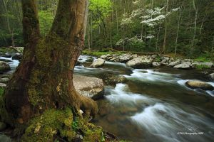 Cycle of Life by TRBPhotographyLLC