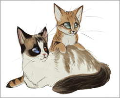 commission - cats by Acrosanti