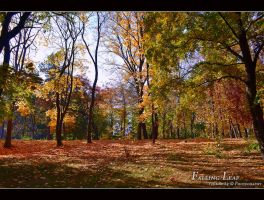 autumnal by Iulian-dA-gallery
