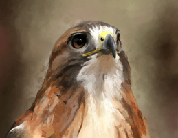 Hawk by Hortensie-Stone