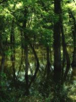 Swamp 3 by midnightstouchSTOCK