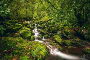 Green Creek Purl by Dapicture