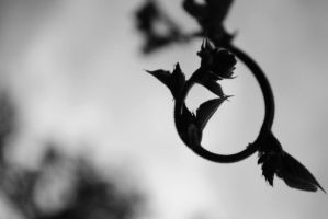Black and White Beanstalk by MaePhotography2010
