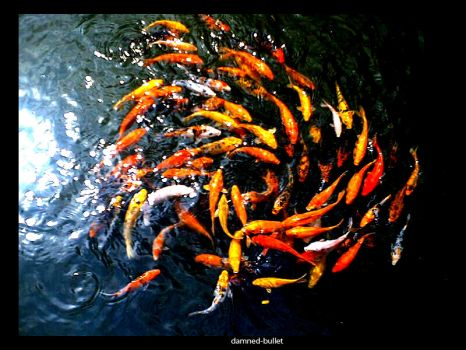 Surround The Koi II by damned-bullet
