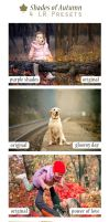 Shades of Autumn - 4 Adobe Lightroom Presets by fernotte94