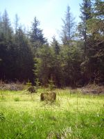 Stump in Clearing I by Jenna-RoseStock