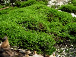 moss stock 03 by hp-abrasion