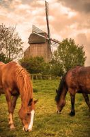 Windmill - Pitgam France by Tetelle-passion