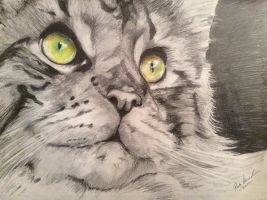 Napu the Mainecoon by Pirata1987
