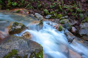 Forest stream by chuckplumber