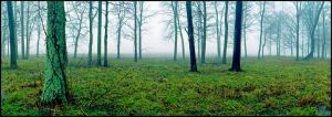 Panoramic field in fog.img697 1 1 by harrietsfriend