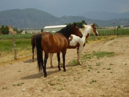 Paint and Bay Horses 14:Stock: by WesternStock