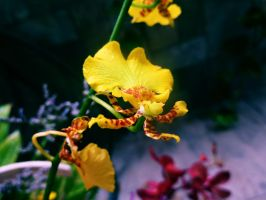 Orchid Stock by LeeStock