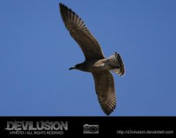 IMG_2103 by D3vilusion