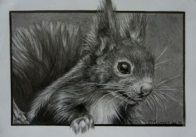 Squirrel by WiccanSoul