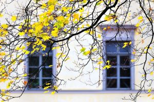 Yellow fall leaves by eswendel