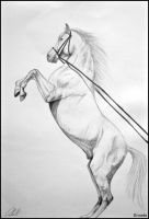 Drawing- bucking white horse by Ennete