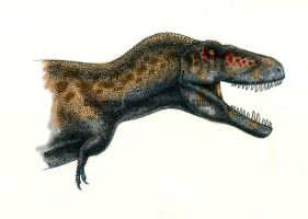 Tyrannosaurus rex II- coloured by T-PEKC