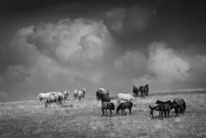 Wild horses... by vincentfavre