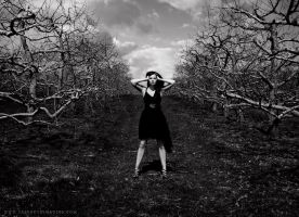 The Orchard by SASPHOTOS