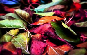 lEaves. by rebstile