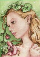 ACEO flower faery 1 by WildWoodArtsCo