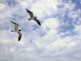 Two In Flight by sympatheic-darkness