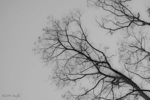 Beautiful Bare Branches by Amalphi