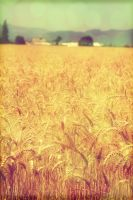 Wheat Field by starfruit89