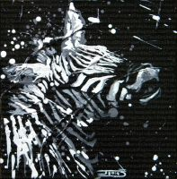 Zebre by JessicaSansiquet