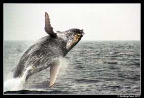 Humpback dance by Hiddenplanet