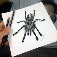 Quick Tarantula sketch by AtomiccircuS