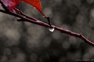A Drop Before Ice by Corvidae65