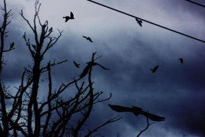 where crows fly by LubelleCreativeSpark