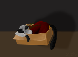 Kitty and the box... by EriciusLux
