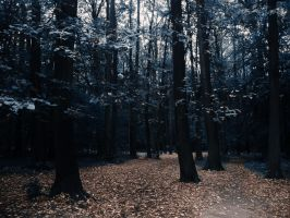 Blue forest by PhotoTori