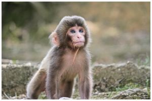Baby Monkey 2 by jaydoncabe