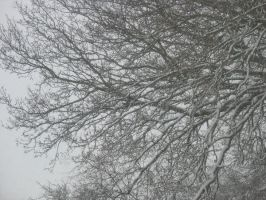 Snow on Branches by pictsy