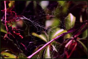 spider web by awedeawie