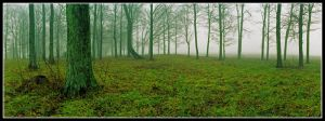 Panoramic trees, color, Noblex.img695 1 by harrietsfriend