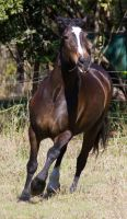 STOCK - 2014 Sep Tolly-80 by fillyrox