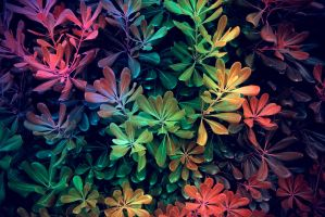 flores arcoiris by KasTher