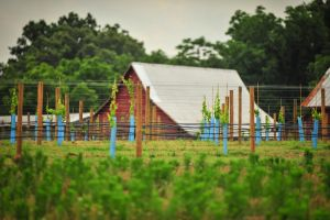 The New Vineyard by MontgomeryKern