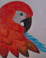 Macaw by theartisticnerd