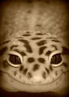leopard gecko2 by cheshirecat84
